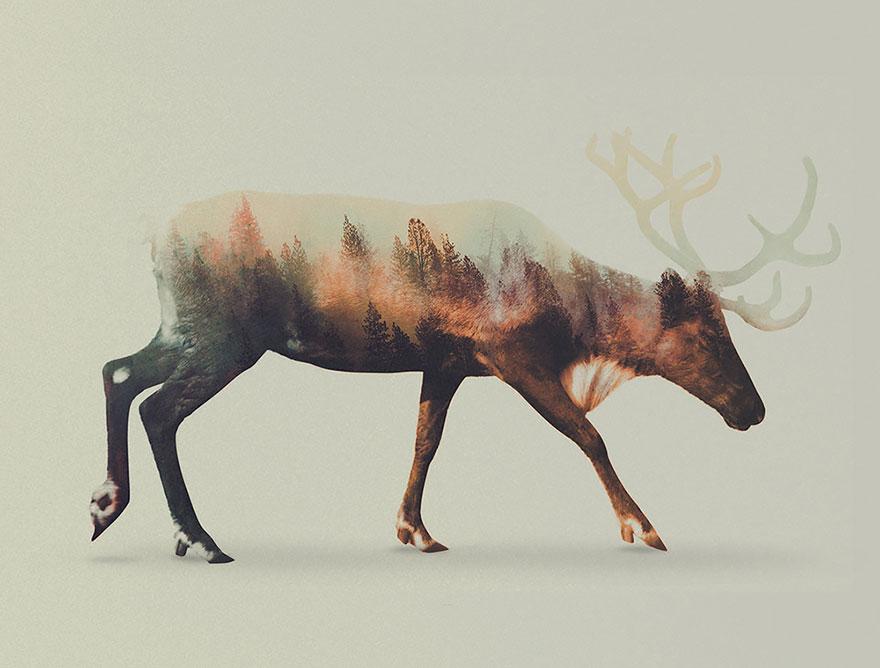 fotos-doble-exposicion-animales-andreas-lie-noruega (3)