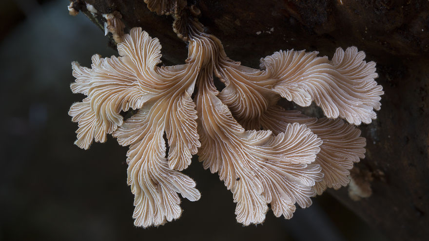 fotos-macro-hongos-steve-axford (4)