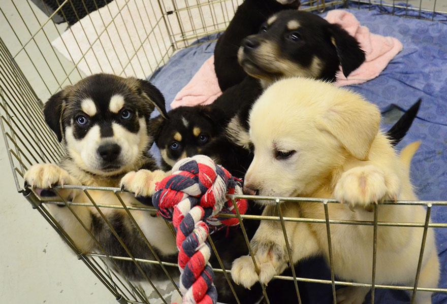 habitacion-cachorros-estudiantes-estresados-universidad-lancashire (2)
