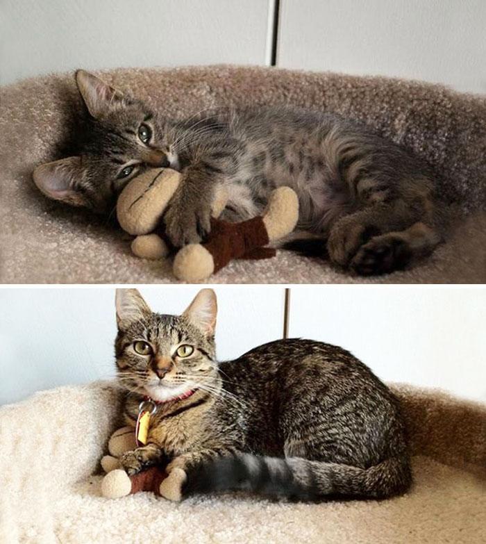 mascotas-creciendo-juguetes (27)