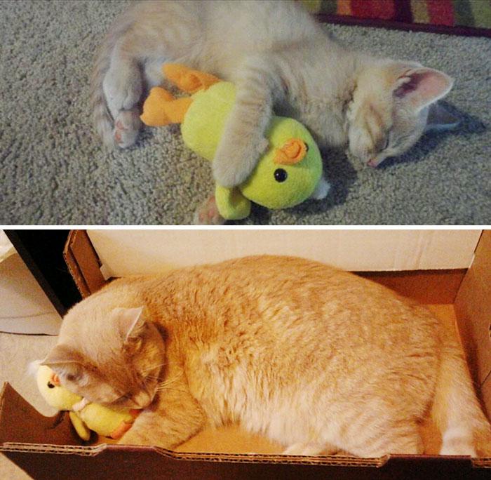 mascotas-creciendo-juguetes (5)