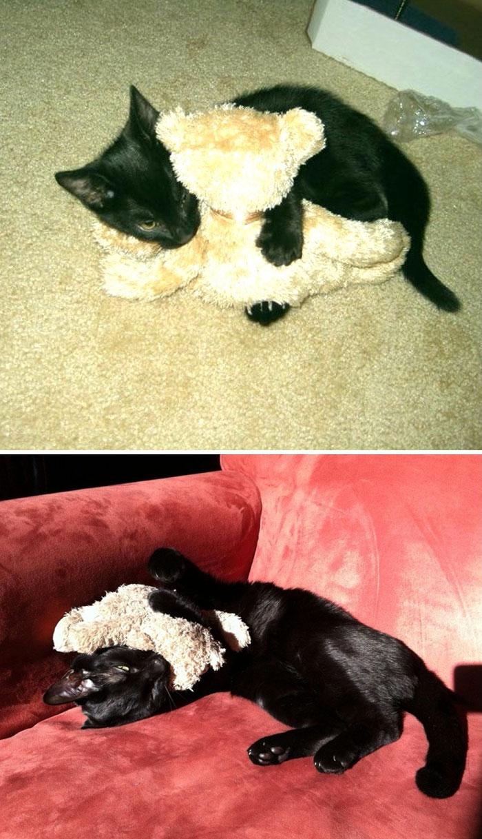 mascotas-creciendo-juguetes (8)