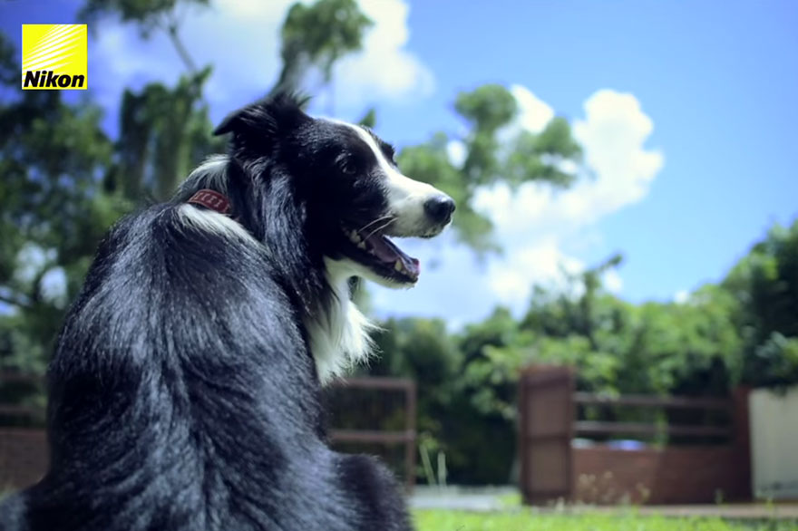 perro-fotografias-monitor-latidos-corazon-nikon (15)