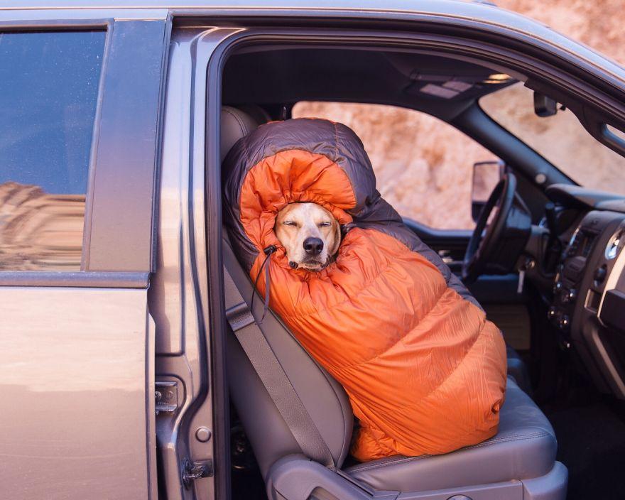perro-maddie-viajes-moto-theron-humphrey (1)