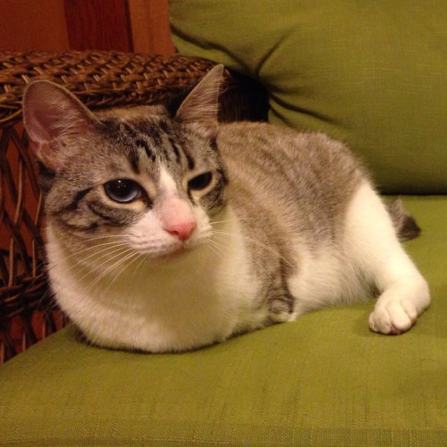 roux-gato-adoptado-2-patas-instagram (5)