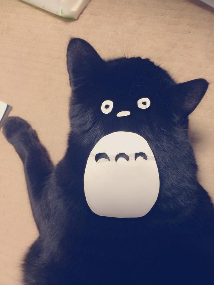 gatos-disfrazados-totoro-duenos-japon (1)