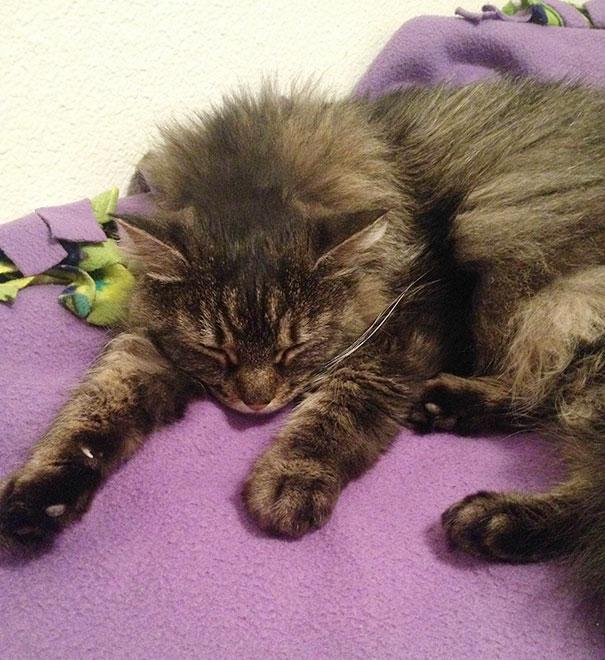 gatos-mayores-adoptados (9)