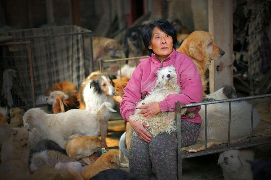 perros-rescatados-festival-yulin-china (1)