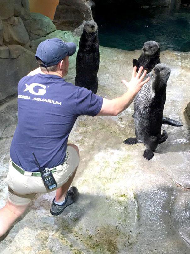 personal-zoos-recreando-escena-jorassic-world (39)