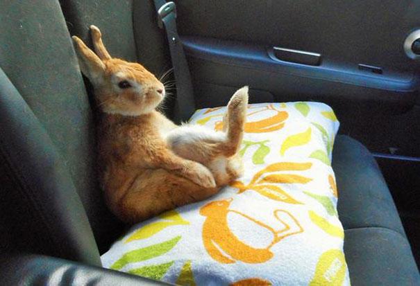 problemas-personas-bajas-conejo-koron-japon (8)