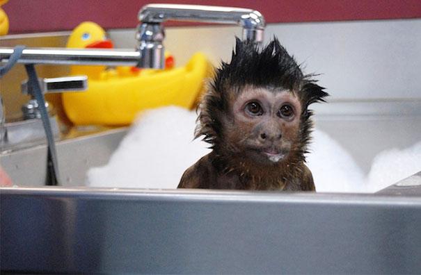 animales-disfrutando-bano (2)