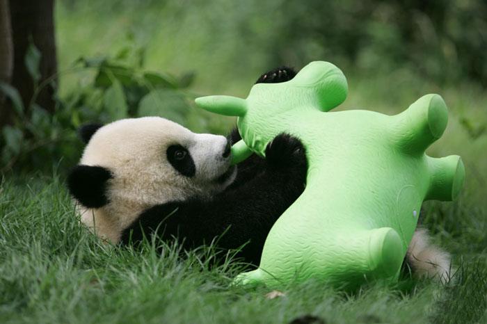 base-investigacion-chengdu-guarderia-osos-panda (18)