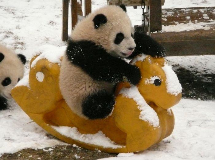 base-investigacion-chengdu-guarderia-osos-panda (4)