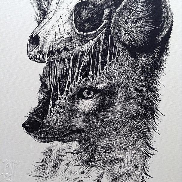 dibujos-esqueletos-animales-paul-jackson (6)