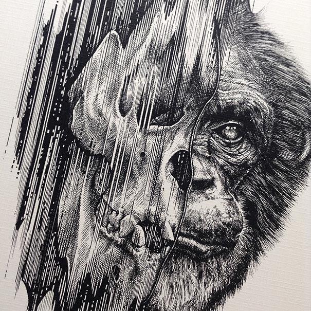 dibujos-esqueletos-animales-paul-jackson (8)