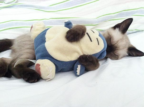 gatos-durmiendo (14)