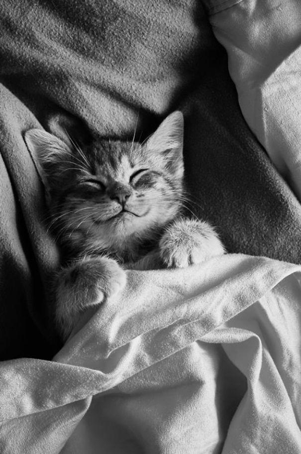 gatos-sonrientes (29)