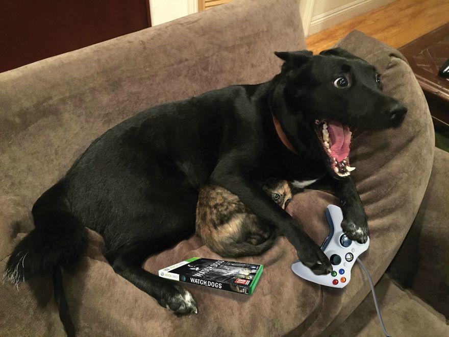 meme-internet-perro-emocionado-protegiendo-gato (12)