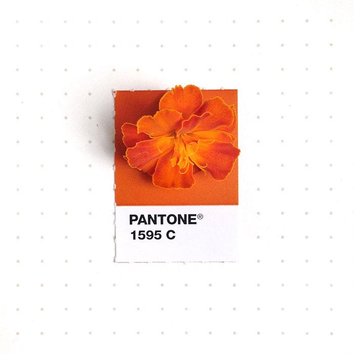 parejas-objetos-cotidianos-muestras-color-pantone-pms-inka-mathews (18)