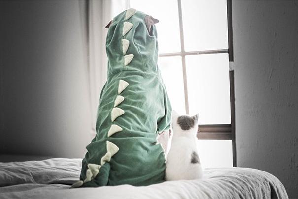 amistad-animal-sharpei-perro-gato-annie-jacobs (1)