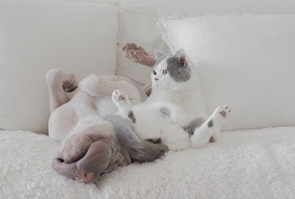 amistad-animal-sharpei-perro-gato-annie-jacobs (13)