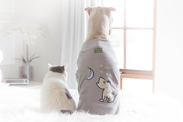 amistad-animal-sharpei-perro-gato-annie-jacobs (15)