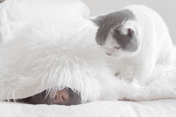 amistad-animal-sharpei-perro-gato-annie-jacobs (7)
