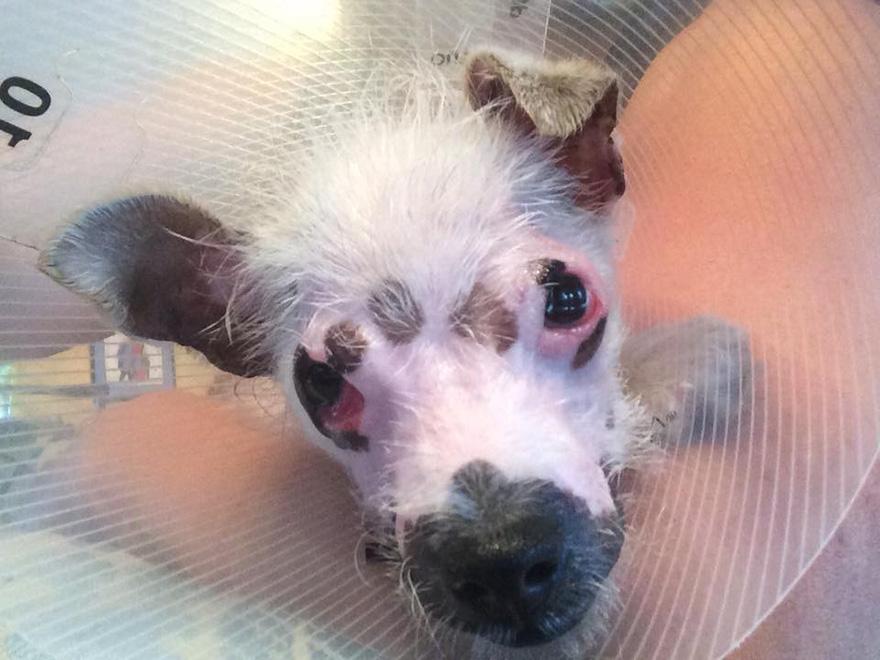 cachorro-perro-cicatrices-adoptado-hssv-christine-doblar (4)