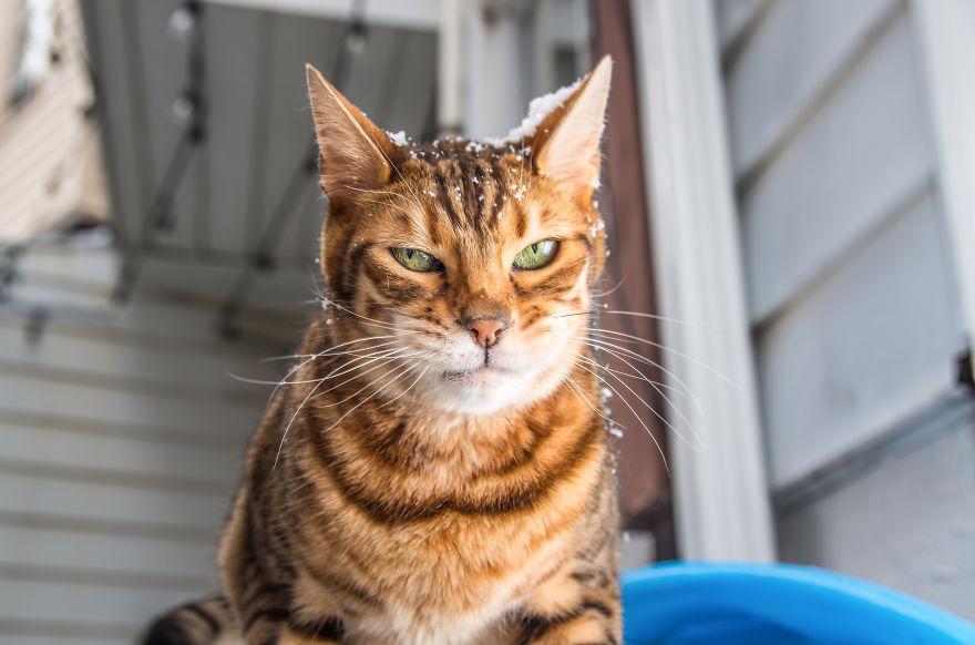 gatos-mostrando-emociones (12)