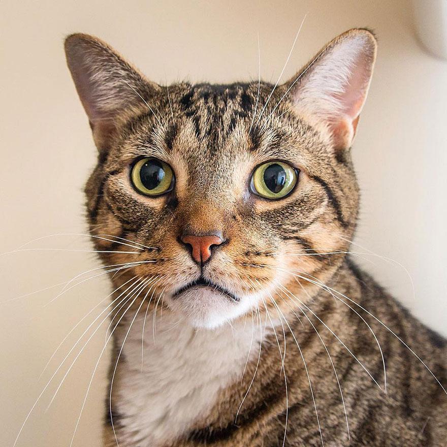 gatos-mostrando-emociones (15)