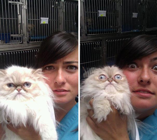 gatos-visitando-veterinario (4)