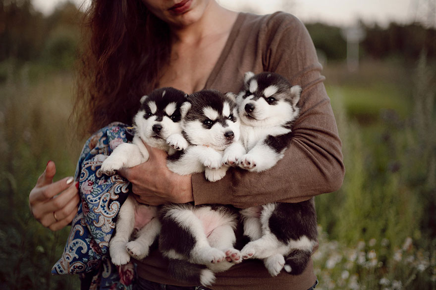 instagram-perros-husky-siberiano-erica-tcogoeva (12)