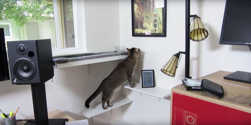 maquina-alimentadora-gatos-cazar-ben-millam (3)