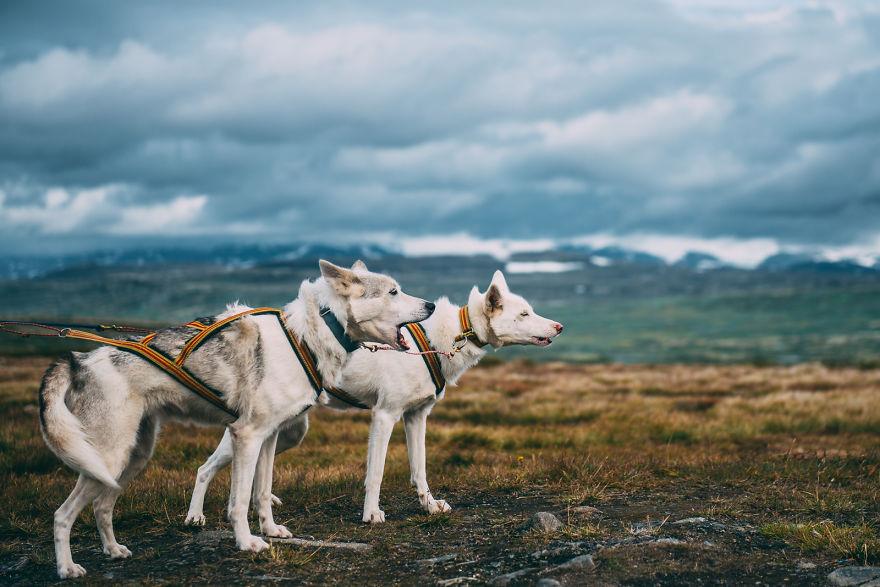 acampada-esqui-noruega-perro-husky-henrik-vikse (10)