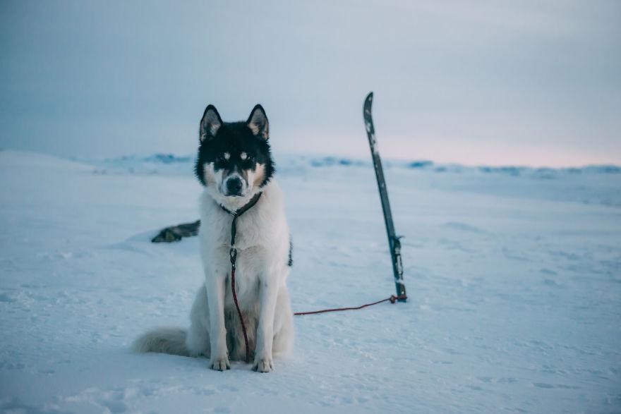 acampada-esqui-noruega-perro-husky-henrik-vikse (9)