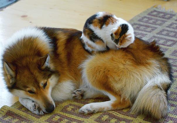 amistad-perros-gatos (8)