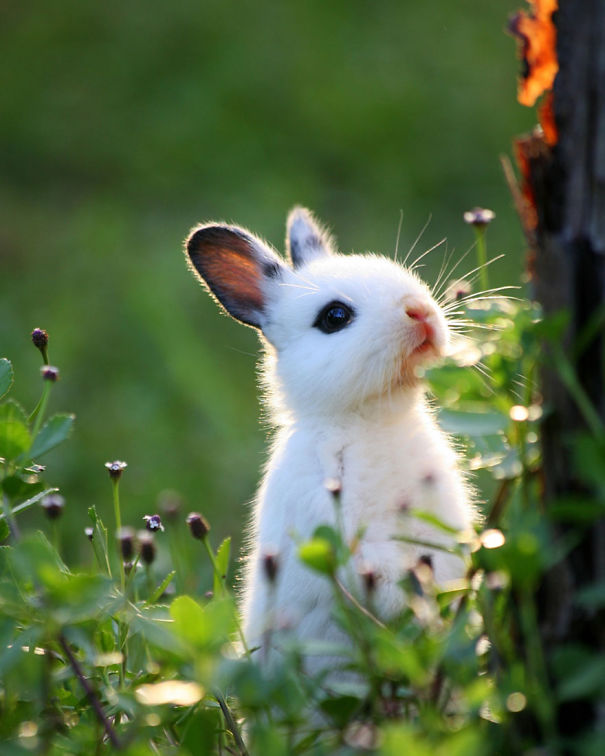 dia-internacional-conejos (19)