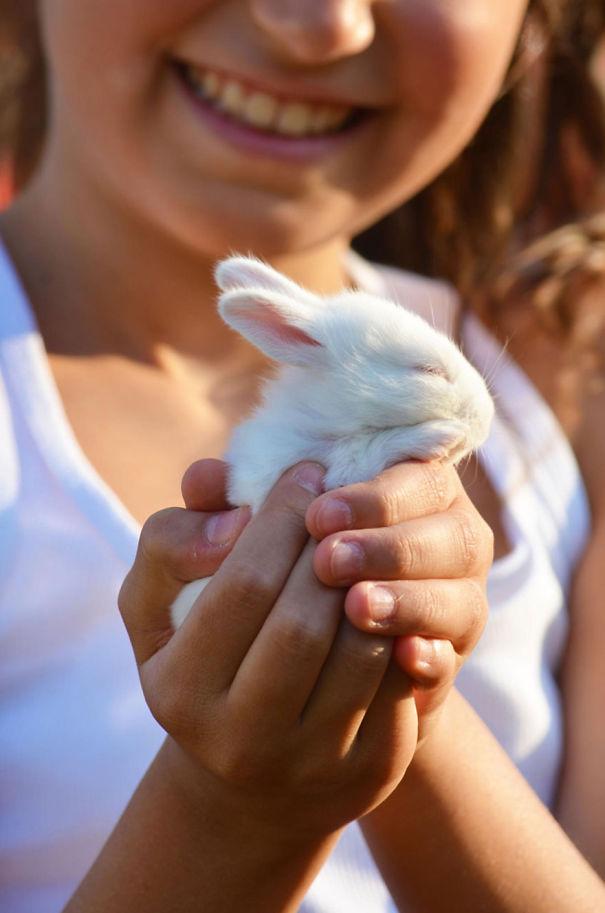 dia-internacional-conejos (2)
