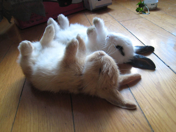 dia-internacional-conejos (5)
