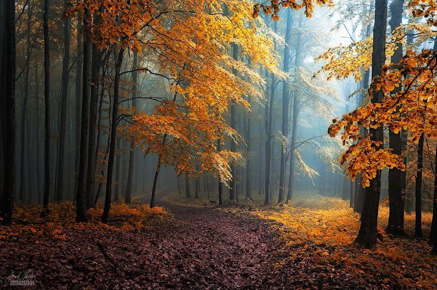 fotografia-bosques-otono-janek-sedlar (2)