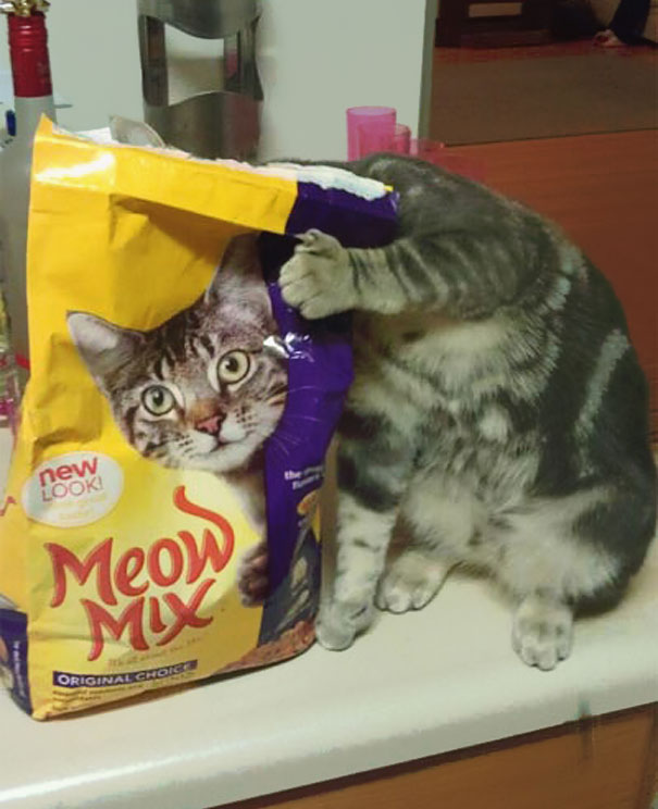 fotos-gatos-momento-justo (4)