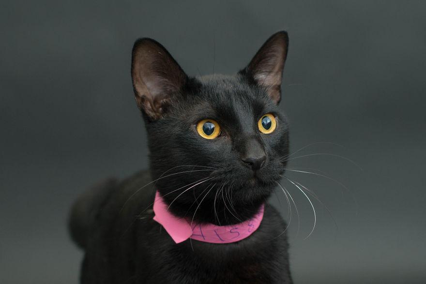 fotos-gatos-negros-adopcion (5)