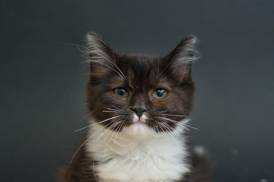 fotos-gatos-negros-adopcion (6)
