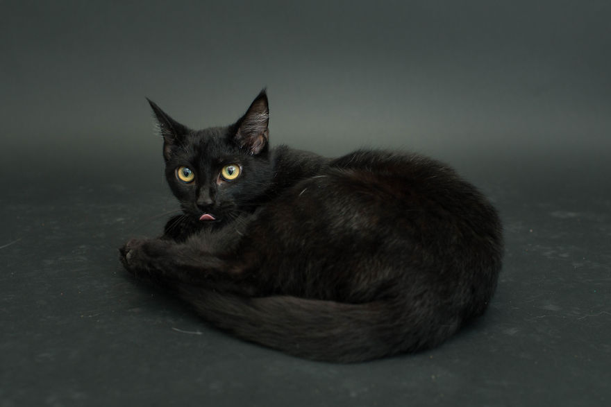 fotos-gatos-negros-adopcion (9)