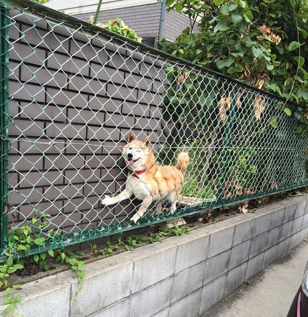 perros-cometiendo-errores (28)