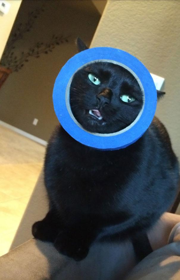 gatos-cometiendo-errores (21)