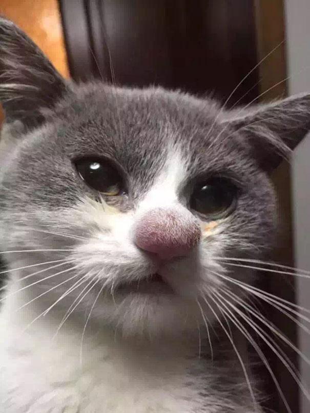 gatos-con-picaduras-de-abejas (7)