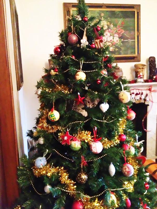 gatos-decorando-destruyendo-arbol-navidad (14)