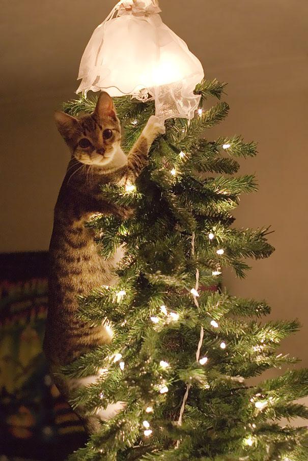 gatos-decorando-destruyendo-arbol-navidad (3)