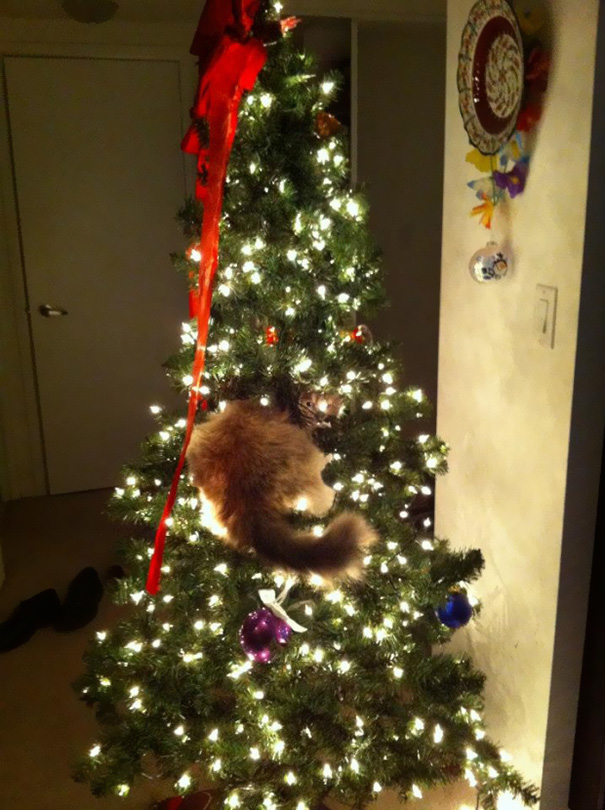 gatos-decorando-destruyendo-arbol-navidad (7)